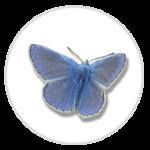 nimble_asset_Common-Blue