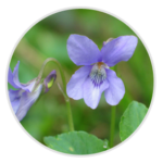 nimble_asset_Dog-Violet