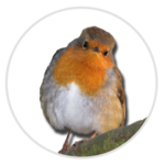 nimble_asset_Robin