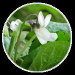 nimble_asset_Sweet-White-Violet