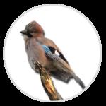 nimble_asset_Jay-1