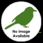 nimble_asset_Mediterranean-Gull