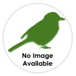 nimble_asset_Ring-necked-Parakeet