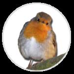 nimble_asset_Robin-1