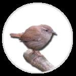 nimble_asset_Wren-1