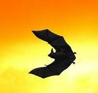 Bat Sunset